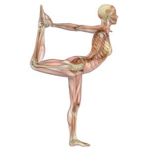 Dancer's pose (natarajasana) anatomy